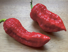 13,6 miljoen graden Some like it hot De Naga Jolokia is door het Guinness Book of Records erkend als de heetste peper ter wereld.
