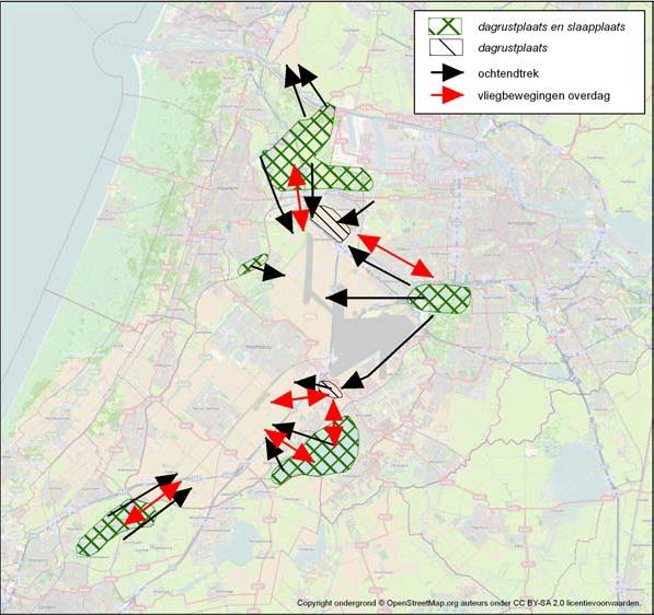 4. Geese: research around Schiphol Study on origins and migration patterns by Bureau Waardenburg (2008-2012) in conjunction with the province of Noord Holland 300 geese ringed and 25 geese