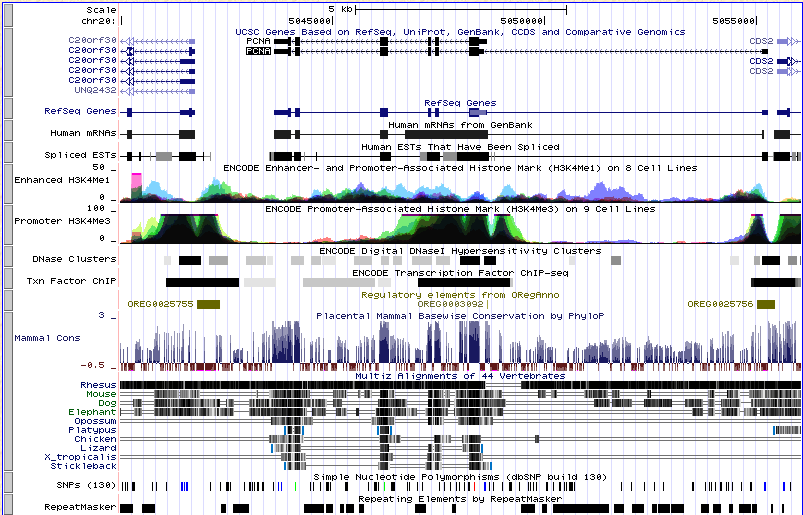 More exercises Genome Browsing human PCNA how many different transcripts? 2 how many proteins?