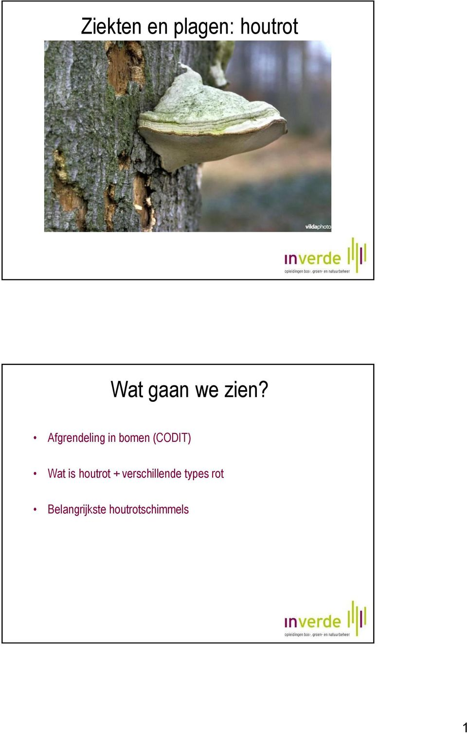 Afgrendeling in bomen (CODIT) Wat is