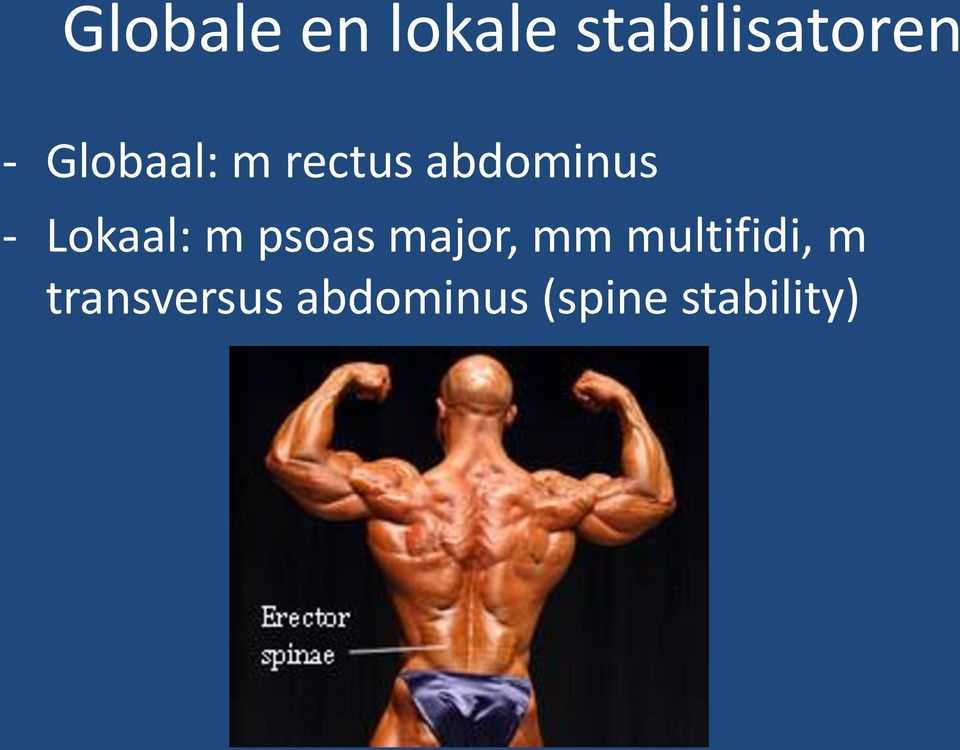 Lokaal: m psoas major, mm