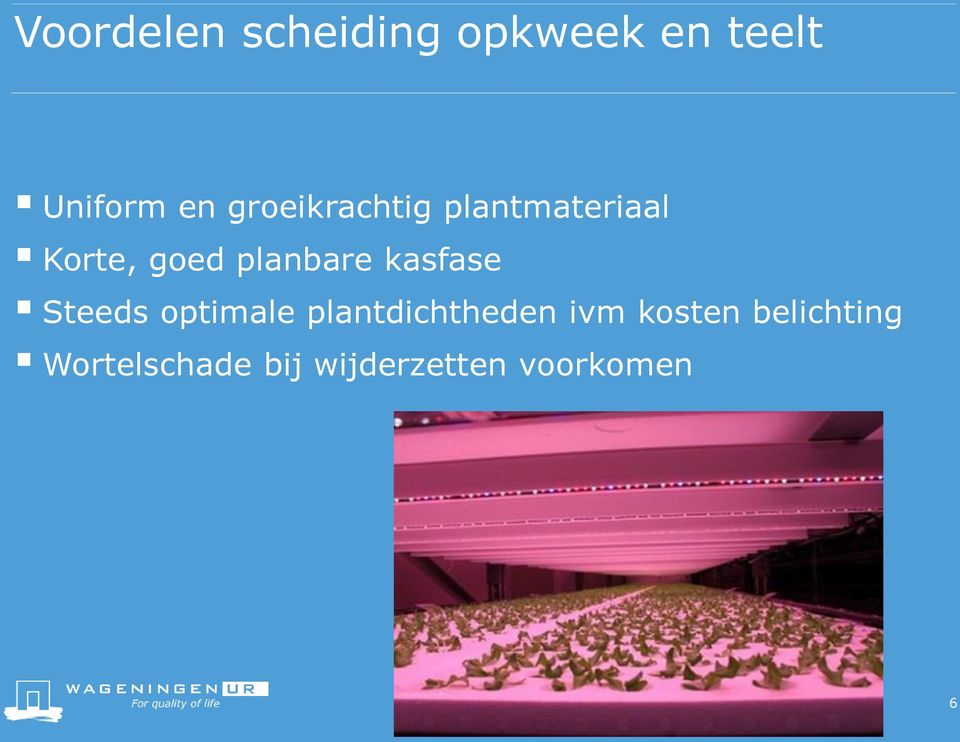 kasfase Steeds optimale plantdichtheden ivm kosten