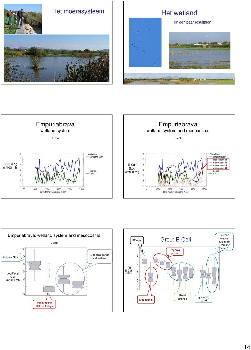 mesocosms Effluent STP E-coli Daphnia ponds and wetland Effluent Grou: E-Coli Daphnia ponds Surface waters Kromme