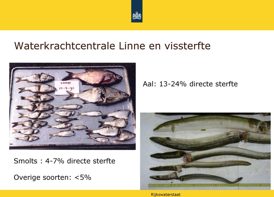 directe sterfte Smolts : 4-7%