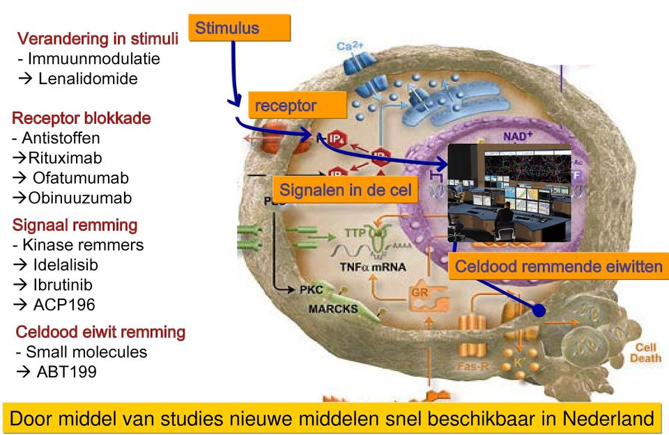 ACP196 Celdood eiwit remming - Small molecules ABT199 Stimulus receptor Signalen in de