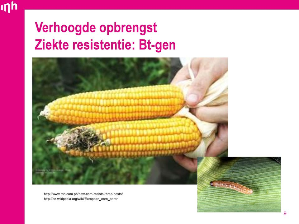 com.ph/new-corn-resists-three-pests/