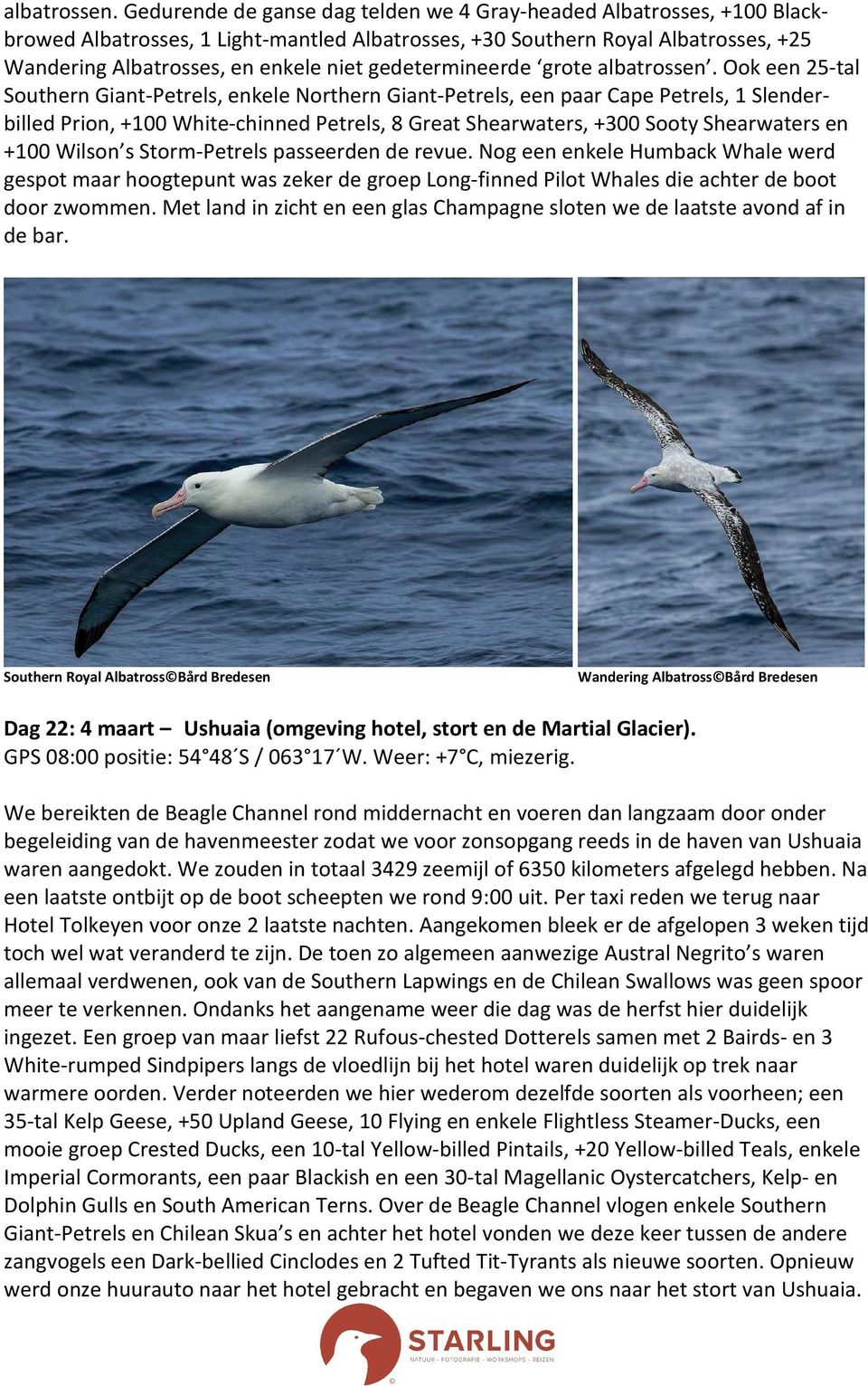 gedetermineerde grote  Ook een 25-tal Southern Giant-Petrels, enkele Northern Giant-Petrels, een paar Cape Petrels, 1 Slenderbilled Prion, +100 White-chinned Petrels, 8 Great Shearwaters, +300 Sooty