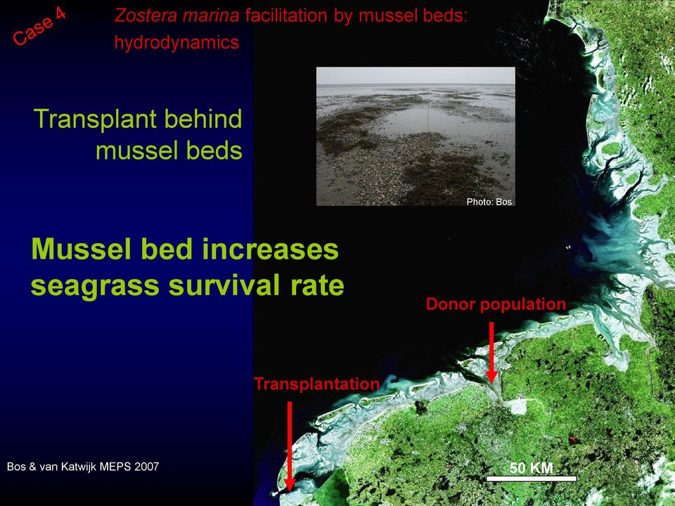 Bos Mussel bed increases seagrass survival rate
