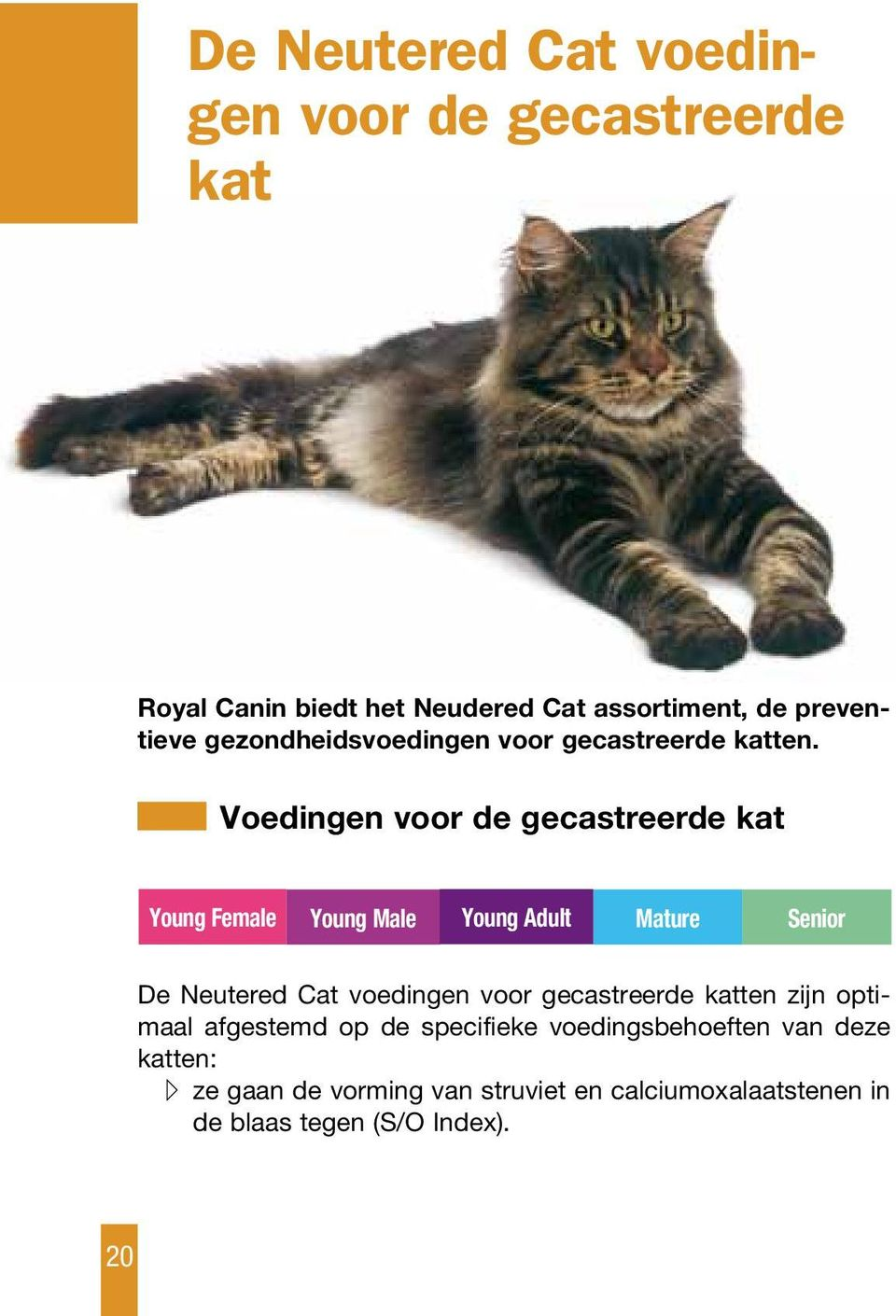 Voedingen voor de gecastreerde kat Young Female Young Male Young Adult Mature Senior De Neutered Cat voedingen voor