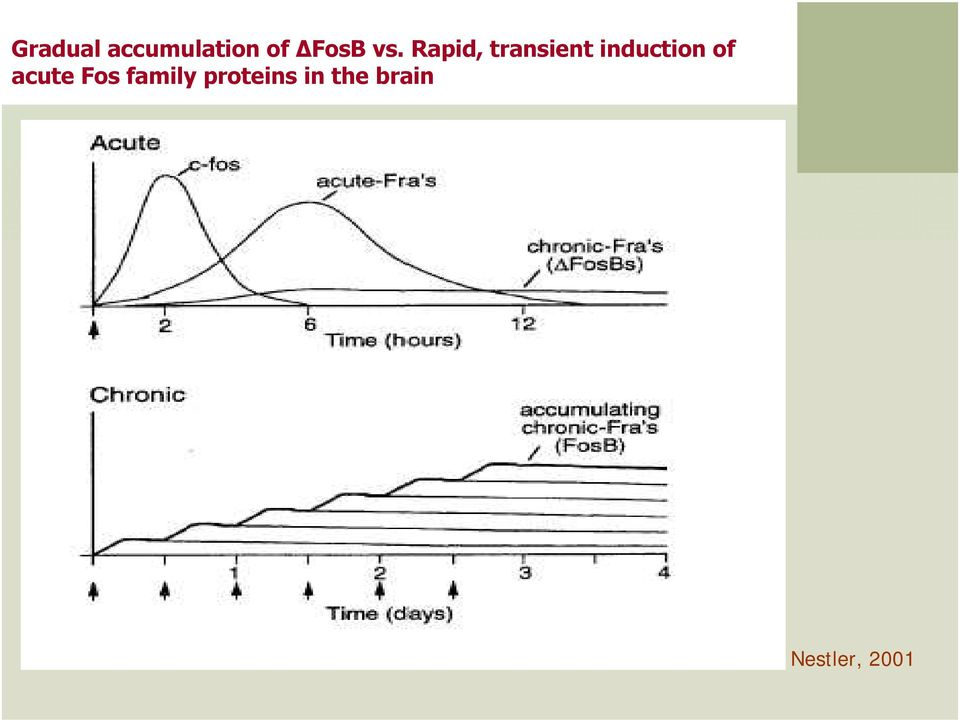 Rapid, transient induction