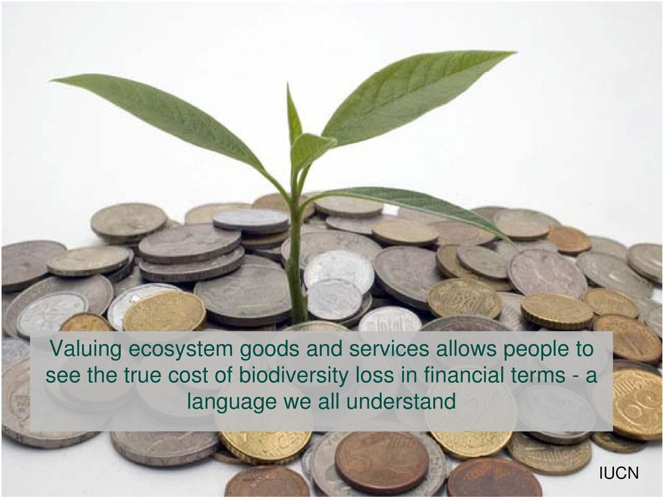 of biodiversity loss in financial