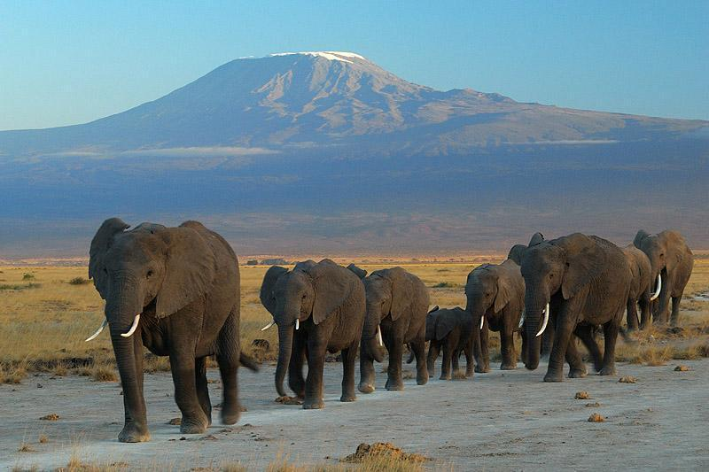4 Amboseli National Park We staan vroeg op om safari drive te
