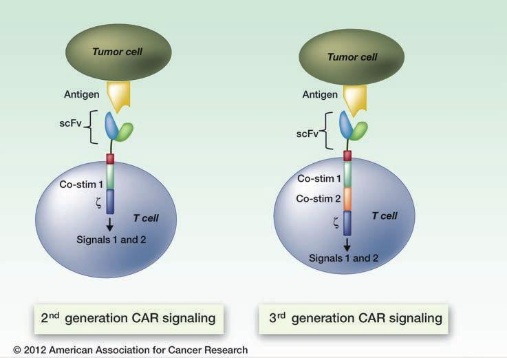 Autologous T cells modified to express