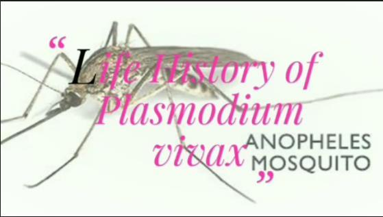 Plasmodium vivax What does the Latin Word vivax mean? The English for the Latin word vivax is lively https://www.youtube.com/watch?