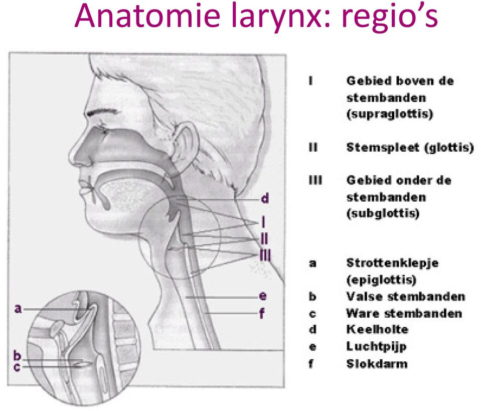 Het larynxcarcinoma. dr. M. Degroote - PDF